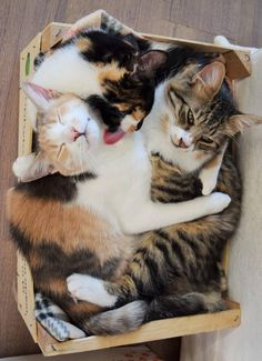 Two sister kittens saved their little brother's life with cuddles and love.Meet Kaneli, Vanilla and their little brother Chili!Joan BowellA year ago, Joan Bowell, animal rescuer, discovered a box left under a fig tree with two newborn kittens in it. The mama cat never came back for them. At that poi...