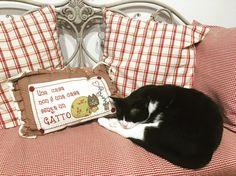 """Mi piace"": 22, commenti: 3 - Amedeo Gianfrancesco (@ame_gianf) su Instagram: ""Vita da gatti 🐱 #cat #catsofinstagram #meow #meownger #love #catlovers #home #sweet #home #family"""
