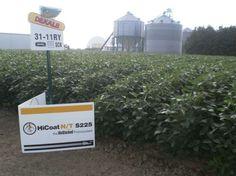 Soybean Test Plot At Devolder Farms