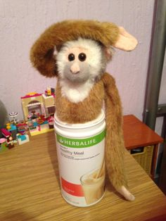 No: 24 - a compact but cosy monkey sanctuary #herbalife #8020wellnessplan