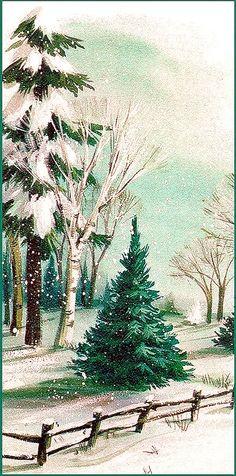 Little Christmas fir.