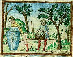 A Feast For The Eyes 35. Black Olives; from the Tacuinum Sanitatis, Österrichische Nationalbibliothek, Vienna, Codex Vindoboniensis 2396.