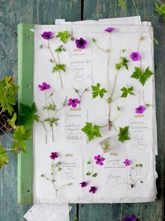 pretty flowers by Dietlind Wolf - blogged today on 79 ideas