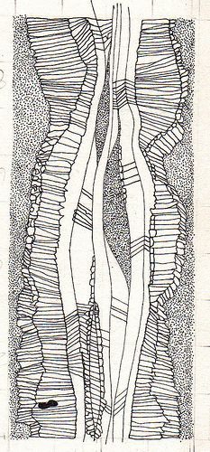 tiny lines pen drawing