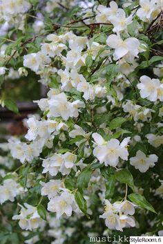 Pihajasmike Moss Garden, Garden Plants, Dream Garden, Home And Garden, Roses Only, Beautiful Flowers Garden, White Gardens, Ornamental Grasses, Trees And Shrubs