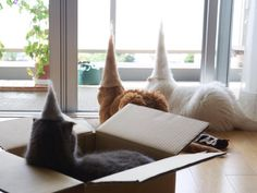 Cats wearing hats made from their own hair.