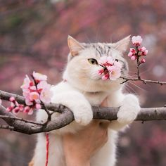 bullzara:land-like-a-cat:Eyes (by @msy1515) Instagram photo | ICONSQUARE (formerly Statigram)Bullzara: ♥La Asociación del Sakura (さくらの会 – sakura no kai), estableció el día 27 como eldía del sakura (さくらの日 – sakura no hi).♥