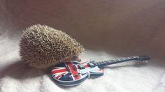 Hedgehog & Guitar
