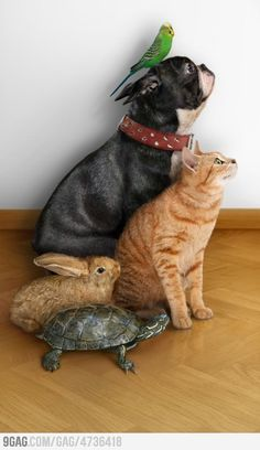 I am so going to try this with my animals! there will be a gecko on the wall and a snake next to the turtle