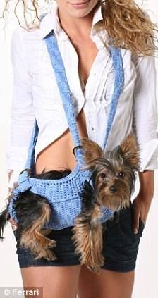 Totally need one of these to carry my Pom!