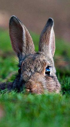 épinglé par ❃❀CM❁✿⊱Watching from the rabbit hole Funny Bunnies, Baby Bunnies, Cute Bunny, Big Bunny, Animals And Pets, Baby Animals, Cute Animals, Beautiful Creatures, Animals Beautiful
