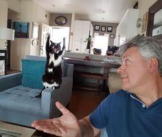 #GOALKITTY: A GATA QUE COLOCA SUAS PATAS PARA CIMA SEM MOTIVOS APARENTES #cat #gato #catslover #amogatos #gata #funny #divertido #handsup