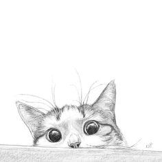 UNDERSTANDING CHANGES IN BEHAVIOUR IN CATS