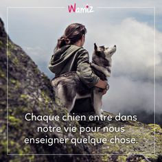 Dog Stories, Animal Protection, Animal Quotes, Belle Photo, Dog Lovers, Phrases, Words, Illustrations, Animals