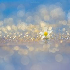Sparkle by Naoko Orr