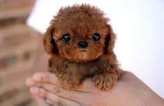I can't get enough of tiny puppies!