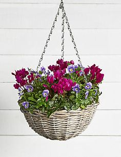 Autumn Hanging Basket Autumn Garden Pots, Winter Garden, Winter Hanging Baskets, When You Are Happy, Plants Online, All Flowers, Beautiful Gardens, Container Gardening, Fingers