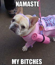 Best Halloween Dogs in Costume