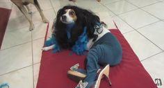 dogs in tights   tumblr mlf2ttyf5x1s6bshxo1 500 Dogs in pantyhose (Gou gou chuan siwa)
