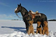 Three amigos and a horse!