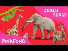 ABC Animal Train   Animal Songs   PINKFONG Songs for Children - YouTube