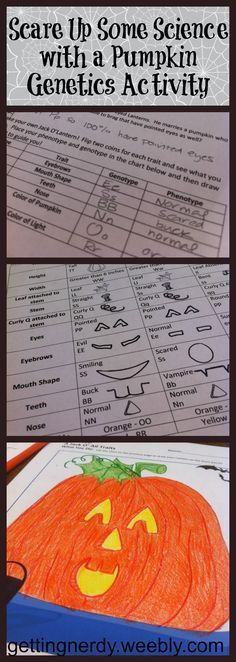 Don't be scared to try out our Halloween Punnett Square Activity! Students will really enjoy these engaging Punnett Square practice problems as they flip coins and use the chart of traits to help the Lanterns determine what their newest little pumpkins wi