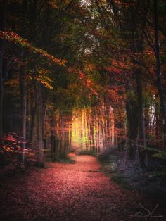 Forest path with autumn colors by  Joost Lagerweij