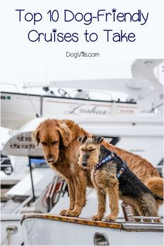 Wondering if there are any dog-friendly cruises out there? Unfortunately, only one major cruise line allows dogs. No worries, though! There are a bunch of smaller companies that welcome them! Check them out! Doodle Your Dog Picks Flying Dog, Dog Friendly Hotels, Cute Dog Collars, Dog Information, Dog Travel, Travel Tips, Travel Destinations, Travel Ideas, Travel Inspiration