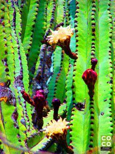 El color en las flores de México