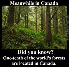 42% of Canada is forested, largely with spruce, poplar & pine.