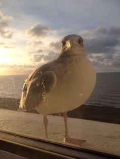 Brighton, Bird, Animals, Animales, Animaux, Birds, Animal, Animais