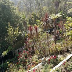Succulent Ranch hillside gardens 2016 #sculptures #gardening #arts #botany #plantpalettes #nasturtiums #crassula #tree #conservation #consciousness #landscape #landscapearchitecture #Land #conservation #consciousness #environment #waterwisegardening #wildlife #canyon #mountain #trails #hiking #nature_perfection by thegivinggame1merrileemarks #waterwise #waterwisegardening #drought #droughttolerant