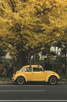 "My dream car has always been a classic beetle. Vasquez mercado - remember grandpa had his and he called it(and Tib) ""Bocho""?lol accessories volkswagen yeah, they were all yellow Aesthetic Colors, Aesthetic Vintage, Aesthetic Yellow, Aesthetic Plants, Summer Aesthetic, Aesthetic Makeup, Aesthetic Grunge, My Dream Car, Dream Cars"