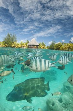 The St Regis Bora Bora