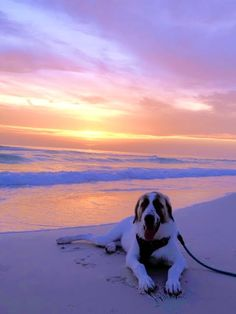 The Cape San Blas beaches are not only beautiful, but you can bring your dogs!  YES!  They can enjoy the beach with you any time of the day 12-months a year!  Come see us & bring the WHOLE family!  Have a large dog?  No problem.  All of my rentals are dog-friendly and big dogs are not a problem! Big Dogs, Large Dogs, Cape San Blas Florida, Florida Travel, Panama City Panama, Dog Friends, 12 Months, Seaside, Beaches