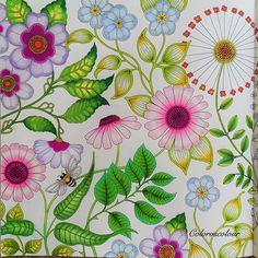 Colorvscolour Chris Cheng On Instagram Garden Coloring PagesSecret BookChris ChengMy