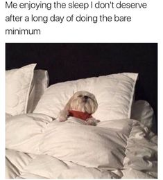 Very funny memes of the day. Check these 27 very funny memes that will make you LOL every time. Dankest Memes, Funny Memes, Jokes, Dog Memes, Funny Dogs, Funny Animals, Dog Humor, Animal Funnies, Funny Farm