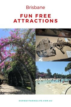 Free things to do in Brisbane? Brisbane free attractions and public transport are sure to delight and captivate the budget traveller. Brisbane River, Brisbane City, Things To Do In Brisbane, New Farm, Houses Of Parliament, Water Play, Free Things To Do, Walking Tour, Public Transport