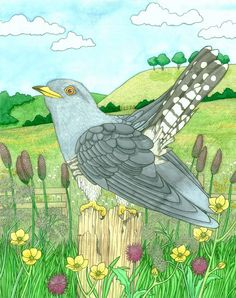 Cuckoo, illustration exhibited at The Picture Show Exhibition, Coningsbury Gallery, London 2012 © Emma Cowley all rights reserved