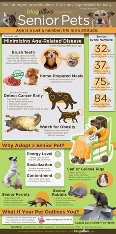 Cinnamon's Blog: Coon Hound Tales: Geriatric Dogs: How to Care for Them