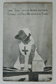 Toby the Red Cross Dog Collecting For Charity WWI