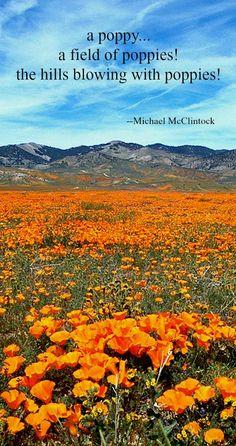 Haiku poem: a poppy! -- by Michael McClintock.