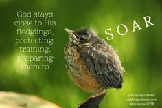 Stay Close to the Father: Fledgling Part Two
