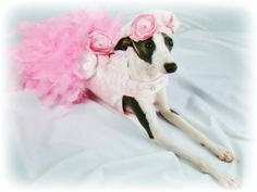 Pink Toile Feather Harness Dog Dress by KOCouture on Etsy, $150.00