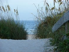 Florida's native vegetation protects the beach eco systems