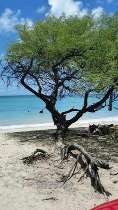 Les salines. Martinique. FWI