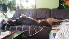 Anton, Big Dogs, Large Dogs
