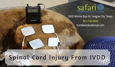 The chronic stage of spinal cord disease in dog is usually initiated one month after the initial insult and continues for six months. Some cases seem to continue to improve over a period of two years. For more information, please visit our center in League City, TX. Visit our web: http://www.safarivet.com/  or call us on 281-332-5612. Or you can mail us on frontdesk@safarivet.com