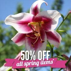 50% off Holland Bulb Farms - ALL SPRING BULBS! Ends 2/18