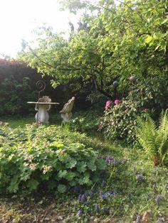 Geranium Garten im Frühjahr